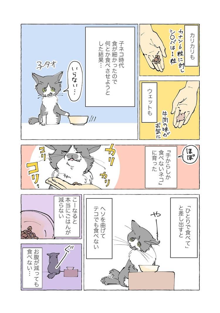 飼い猫の手からしかご飯を食べない猫2 by 漫画家、ねこと暮らす ~猫も杓子もタオ日記~のワンシーン