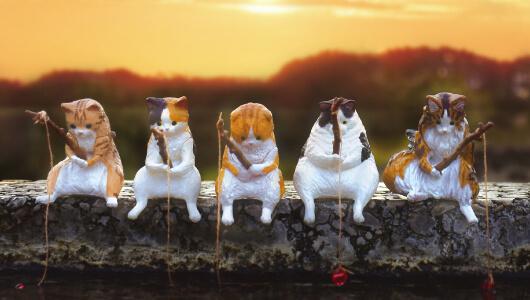 糸を垂らして釣りをする猫のカプセルフィギュア「釣り日和~猫たちのひまつぶし~」を全種類並べて飾ったイメージ