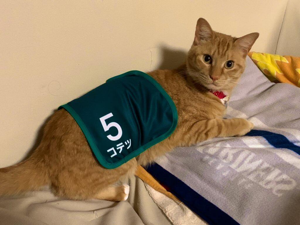 競馬風ミニゼッケンを猫が装着したイメージ