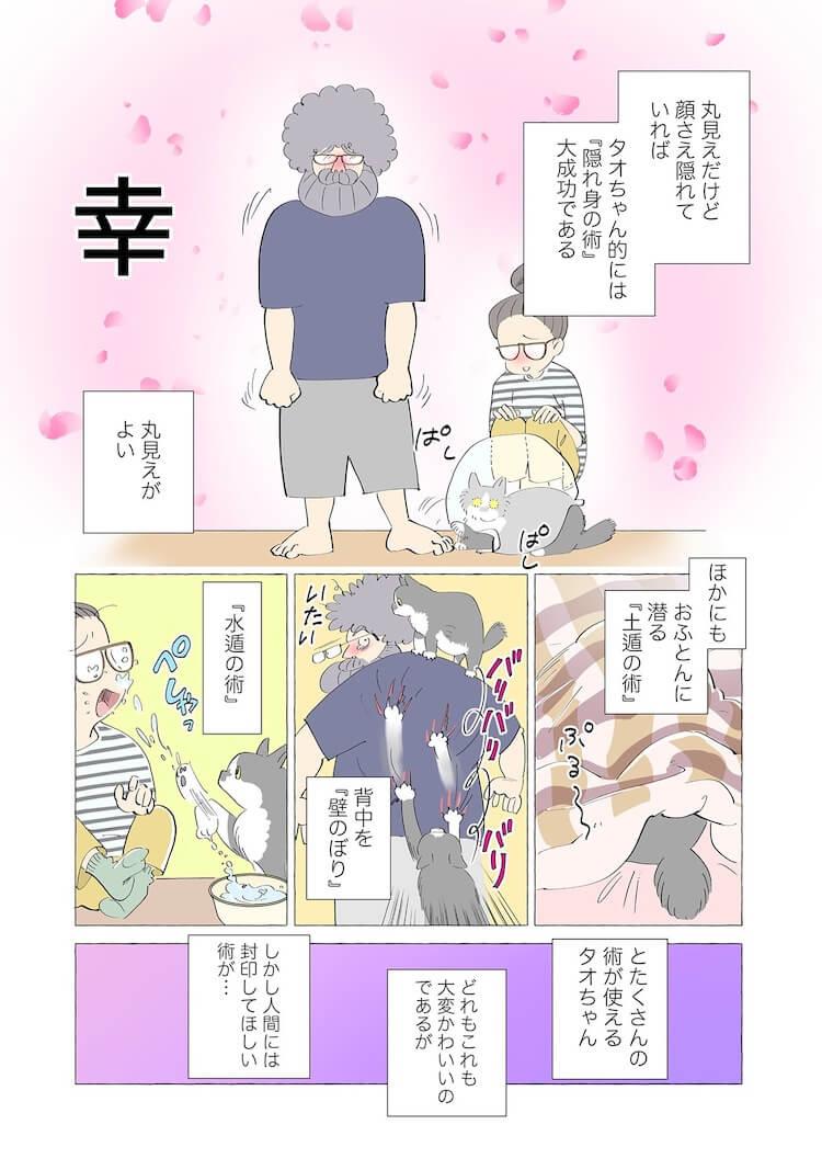 隠れるのが大好きな猫3 by 漫画家、ねこと暮らす ~猫も杓子もタオ日記~のワンシーン