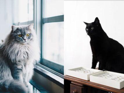 手づくり結婚指輪のお店でお客さんを癒やすのは…2匹の看板猫!可愛いLINEスタンプも登場
