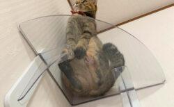 猫の肉球がまる見え&空きスペースを有効活用!部屋の隅っこ専用の透明キャットステップが登場