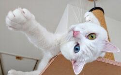 今年で12回目!命を救われた犬猫の写真コンテストが作品を募集中&賞金は最大10万円ニャ