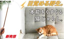 俊敏な動きで猫の狩猟本能を刺激する!バネ屋さんが開発した猫じゃらし「ばねじゃらし」
