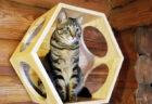 猫トイレやキャットタワーも完備!軽井沢プリンスホテルに飼い猫と泊まれるコテージが誕生