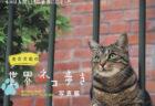 岩合さんの解説が聞けるWEBイベントも!写真展「岩合光昭の世界ネコ歩き」8/29まで開催中