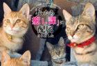 ねこの仕事は…癒やすこと!印刷工場で働く猫たちの写真集「私たち、癒し課に配属されました」