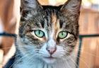 愛猫のために遺言書を作成して保管・執行してくれるサービス、三井住友信託銀行が提供開始