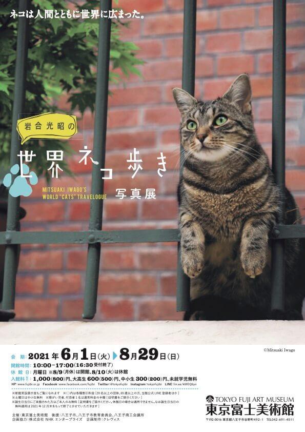 東京富士美術館で開催されている写真展「岩合光昭の世界ネコ歩き」メインビジュアル