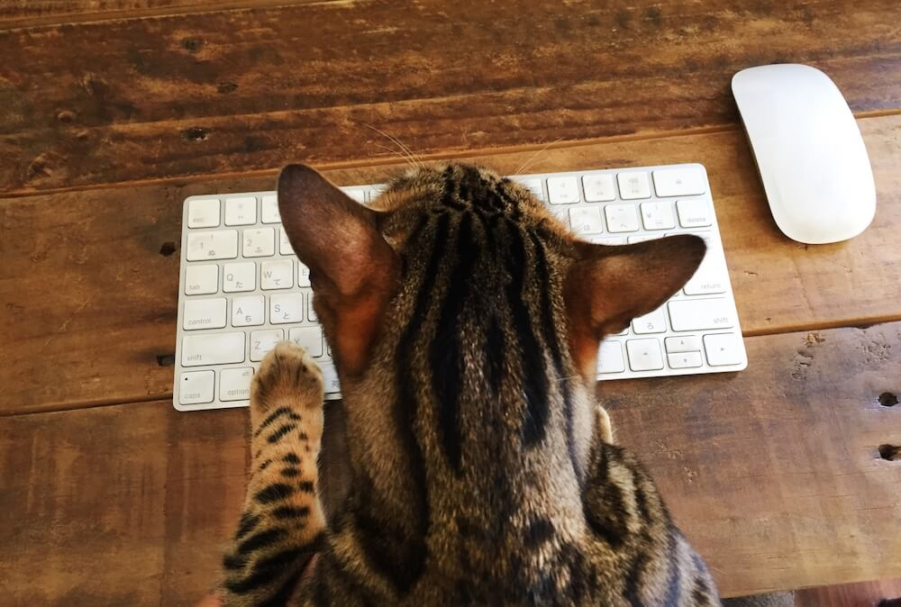 パソコンのモニターに向かってキーボードを叩く猫のイメージ写真