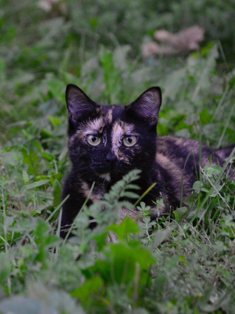 迷子になってしまった猫のイメージ写真