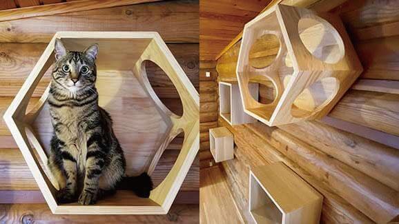キャットコテージの猫ハウスでくつろぐ猫の様子 by 軽井沢プリンスホテル イースト