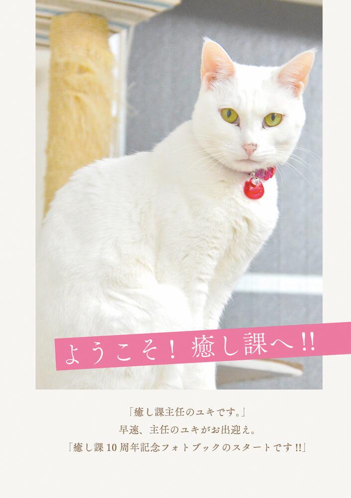しまや出版「癒し課」の主任猫「ユキ」