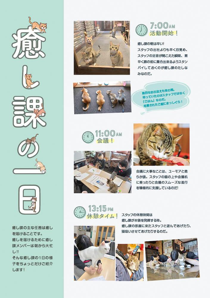 しまや出版「癒し課」に所属する社猫の1日の過ごし方