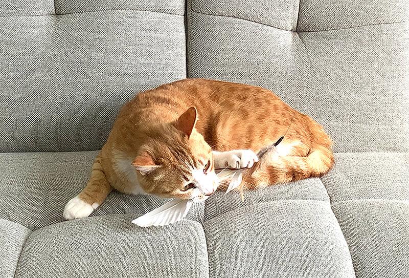 バネ屋さんが開発した猫じゃらし「ばねじゃらし」で遊ぶ猫のイメージ