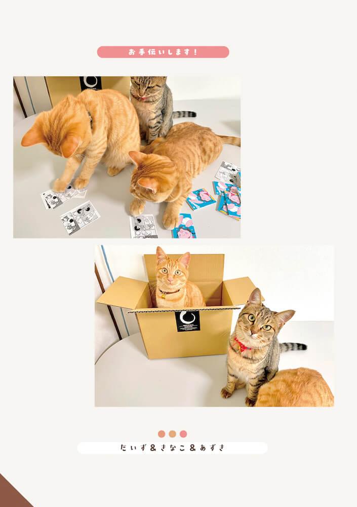 しまや出版「癒し課」に所属する社猫のお手伝い風景