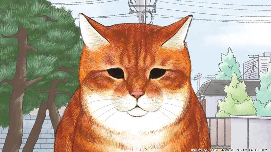 びびり猫の「ちゃー」(CV:岡本信彦) by テレビアニメ「俺、つしま」