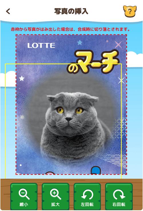 コアラのマーチ オリジナルパッケージ用に猫の写真をアップロードした様子