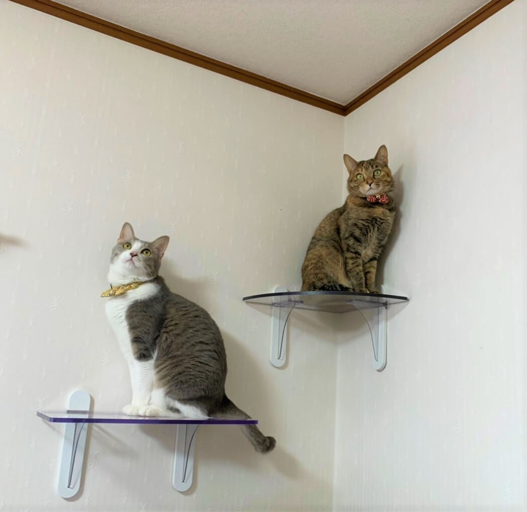 透明なキャットステップに乗ってくつろぐ猫たち