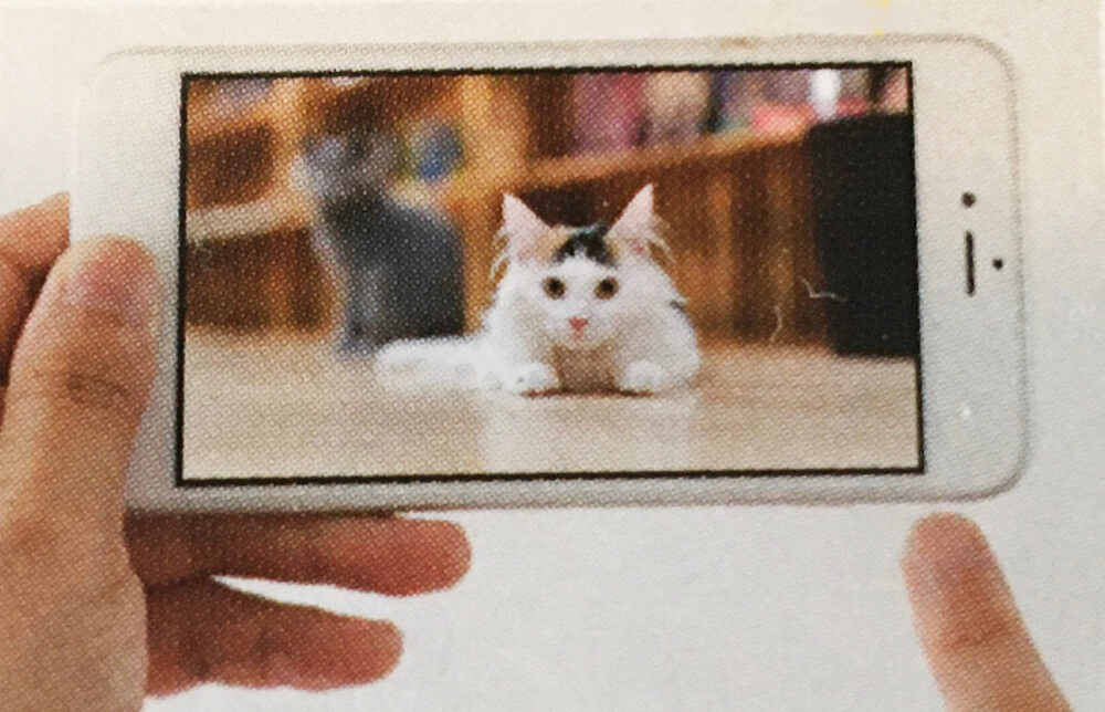 AR技術でスマホをかざすと会場に猫が現れる by にゃんだらけ