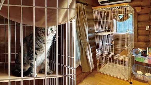 飼い猫と一緒に泊まれるキャットコテージに設置されている猫用ケージ by 軽井沢プリンスホテル イースト