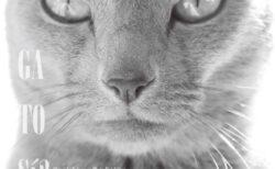 Neko Project展の最優秀賞に選ばれた作品を展示、写真家・横澤進一氏の猫写真展が開催