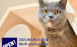 猫と半個室でまったり!本格的なドリンクも楽しめる「Moff animal cafe」倉敷にオープン