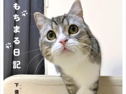 YouTubeの登録者数が100万人を突破!人気猫のもちまる(もち様)の1st写真集が登場