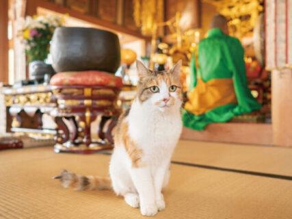 お寺で暮らす猫たちと住職さんの日常に癒やされる「てらねこ写真展」大宮で開催&猫グッズも