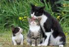 北海道から沖縄の猫まで!大判で迫力たっぷりの写真集『岩合光昭 み~んな元気ネコ』