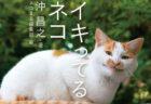 ヤンキー顔の猫に癒やされる!ねこカメラマン・沖昌之さんの新作写真集『イキってるネコ』