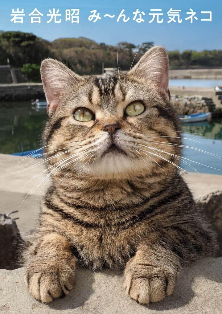 猫の写真集『岩合光昭 み~んな元気ネコ』表紙イメージ