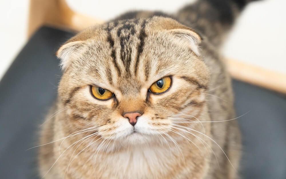 癒やし系の猫のイメージ写真