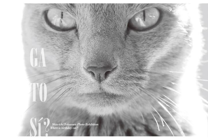 写真家・横澤進一の猫写真展『GA TO S?? 誕生日の猫は何処?』メインビジュアル