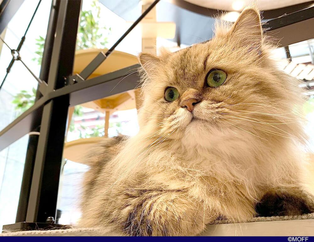 Moff animal cafeアリオ倉敷店が新規オープン
