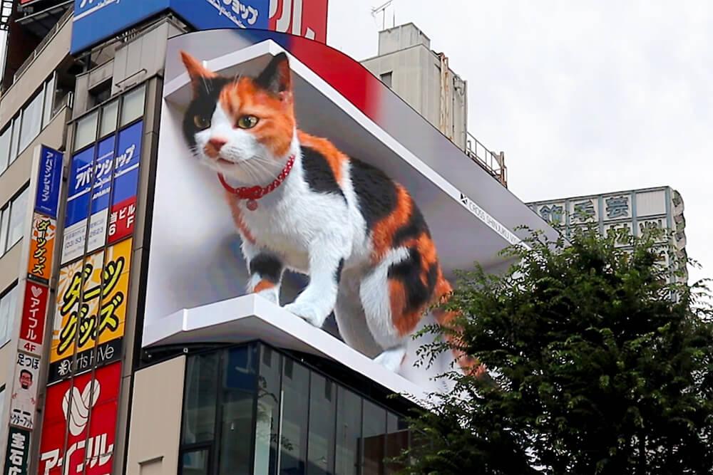 巨大な三毛猫の3D映像 by デジタルサイネージ「クロス新宿ビジョン」
