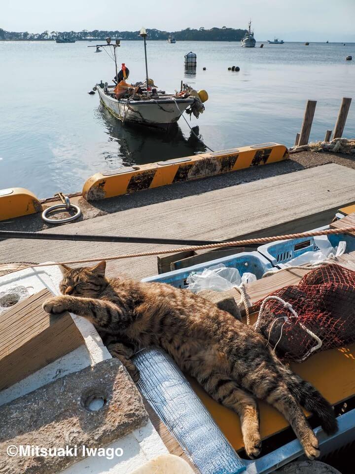 昼寝をする漁港の猫(静岡) by 写真集『岩合光昭 み~んな元気ネコ』