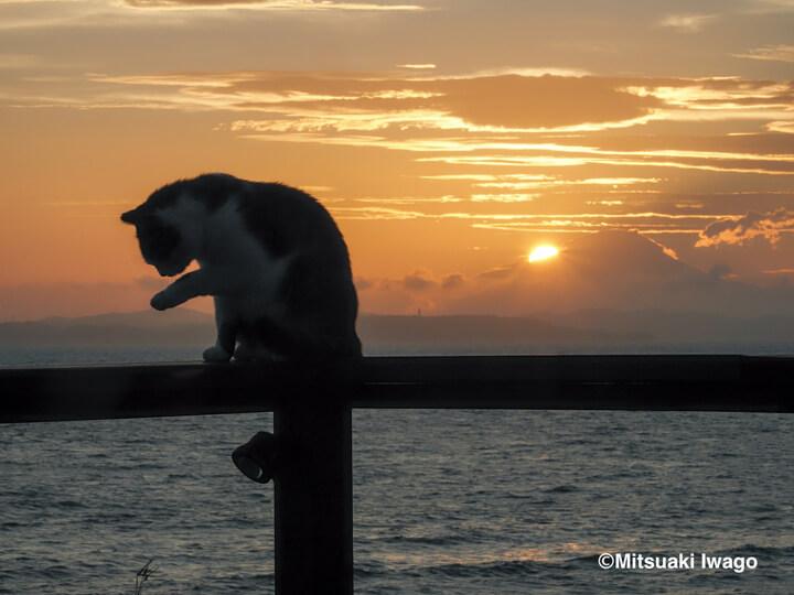 富士山と夕日を背景に毛繕いする猫(千葉) by 写真集『岩合光昭 み~んな元気ネコ』
