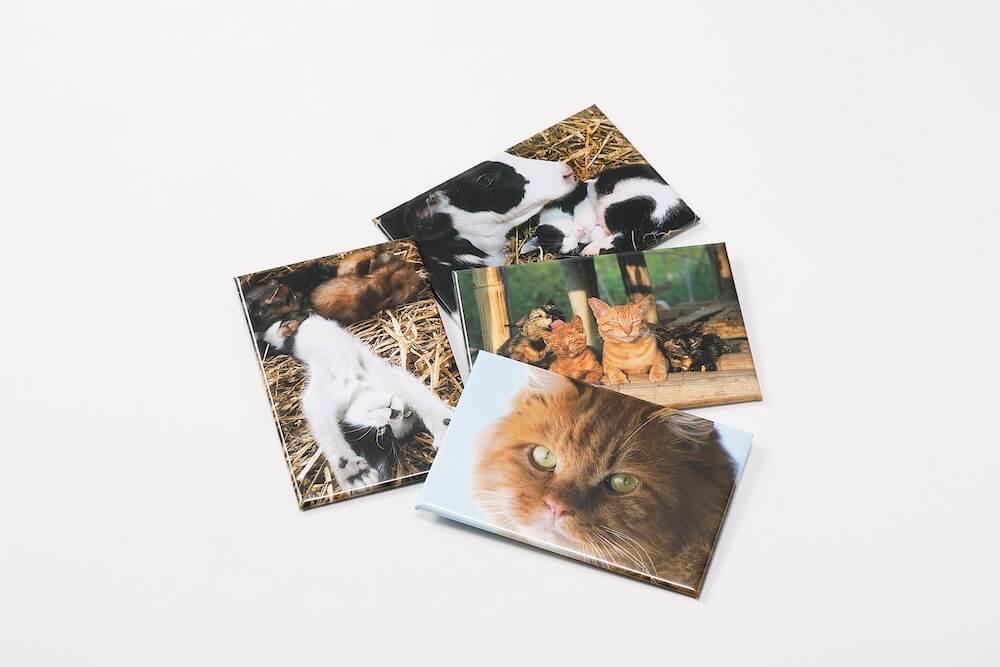 角マグネット『劇場版 岩合光昭の世界ネコ歩き あるがままに、水と大地のネコ家族』のオリジナルグッズ