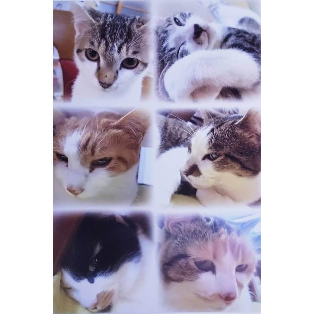 長楽寺の猫メモ帳