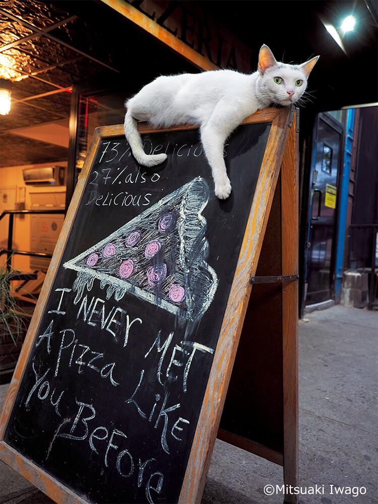 ニューヨーク・ブルックリンのピザ屋の看板猫「ホワイトスライス」 by 写真展 岩合光昭の世界ネコ歩き2