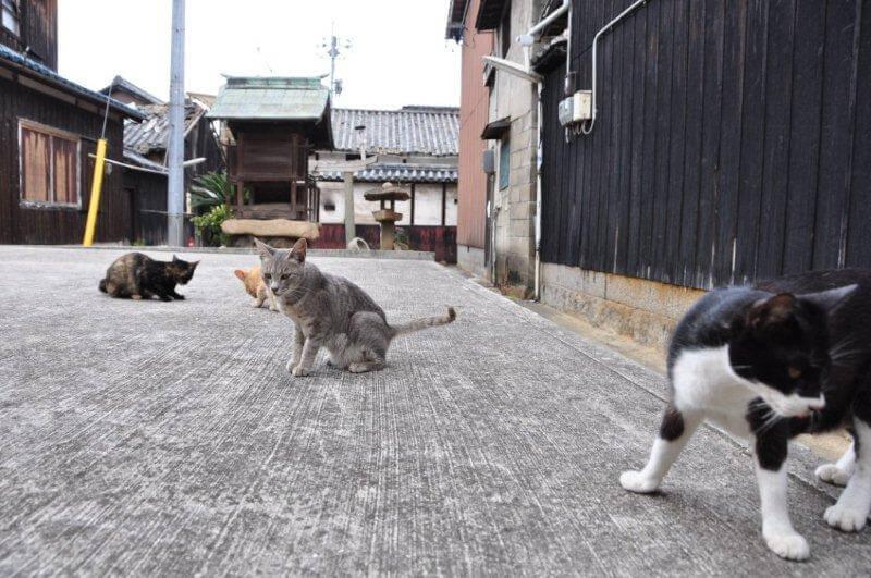猫の会議・猫の集会イメージ写真