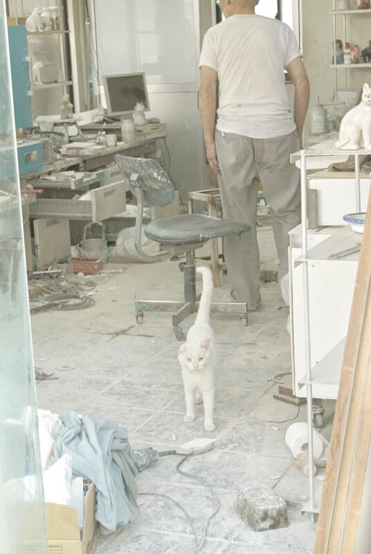 作業場の白猫写真 by 横澤進一