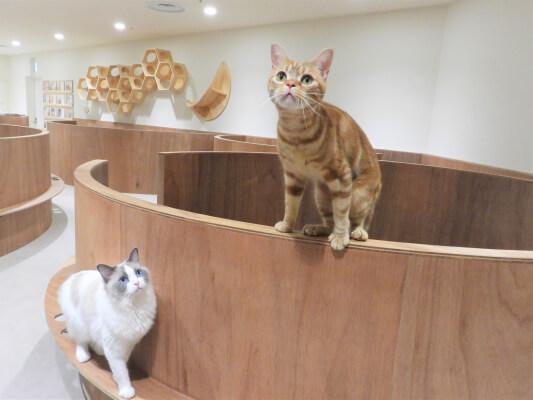 Moff animal cafeアリオ倉敷店の店内イメージ