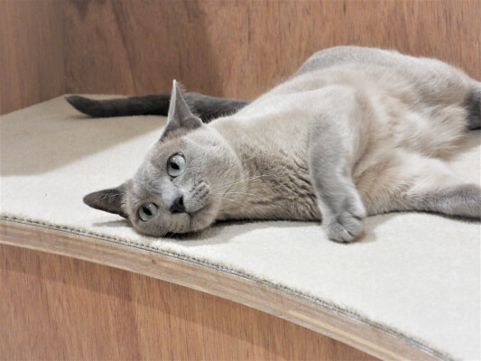 Moff animal cafeアリオ倉敷店の猫スタッフ