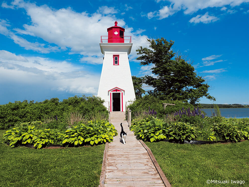 カナダ・プリンスエドワード島の人気猫「ホーマー」 by 写真展 岩合光昭の世界ネコ歩き2