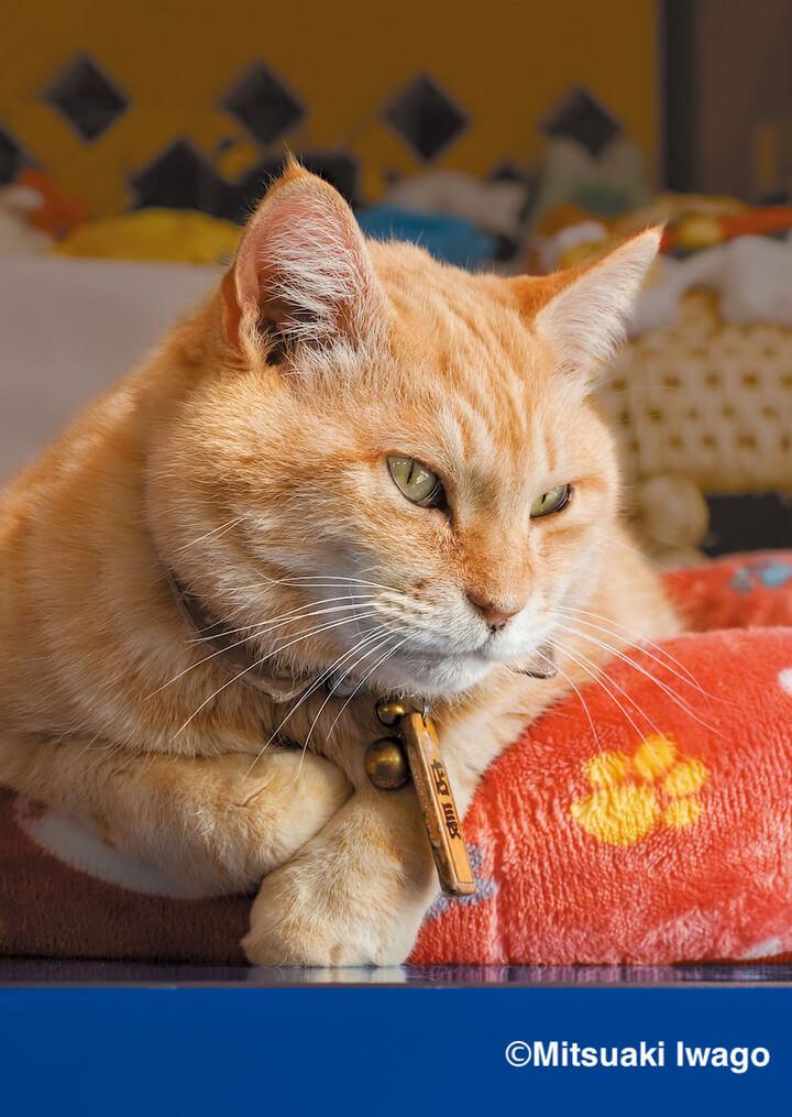 伊豆・恋人岬の名物猫「らぶにゃん」 by 写真集『岩合光昭 み~んな元気ネコ』