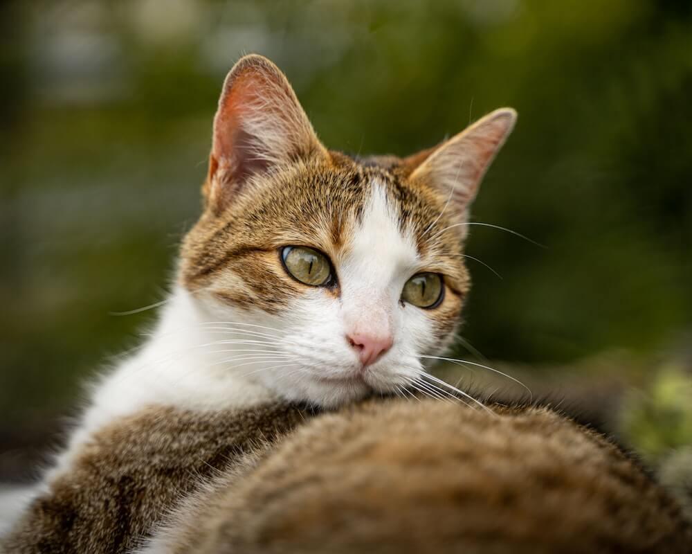 憂鬱そうな猫のイメージ写真
