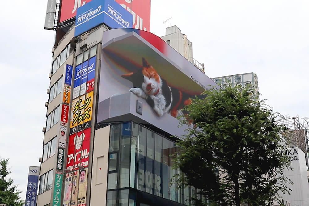ビルの上で巨大な三毛猫が眠っている様子 by 街頭ビジョン「クロス新宿ビジョン」