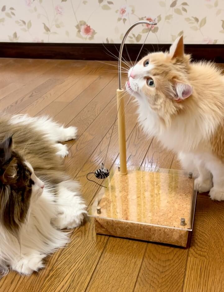 磁石の力で動く猫用おもちゃ「マグネッコ」で遊ぶ猫の様子